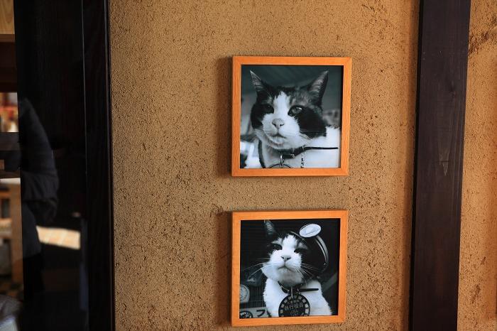 猫駅長に会いに_a0294534_13432540.jpg