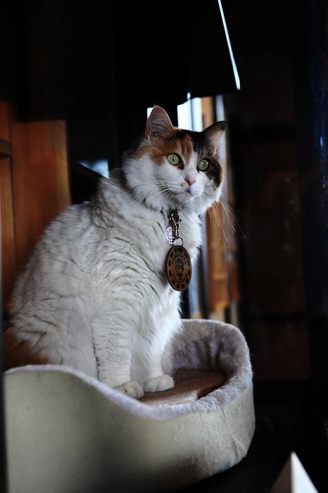 猫駅長に会いに_a0294534_13445178.jpg