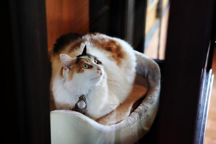 猫駅長に会いに_a0294534_13463033.jpg
