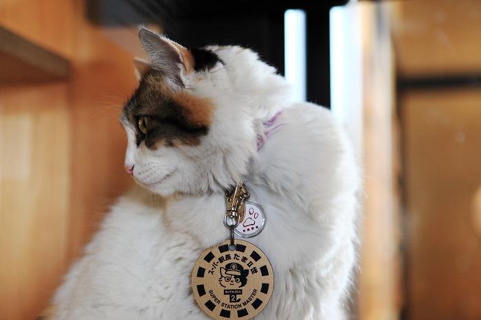 猫駅長に会いに_a0294534_1346867.jpg