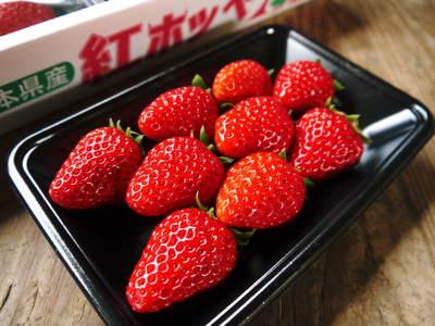 熊本産高級イチゴ『完熟紅ほっぺ』完熟の美味さ!朝採りの新鮮さ!こだわり減農薬栽培の安全性!が大好評!!_a0254656_1221752.jpg