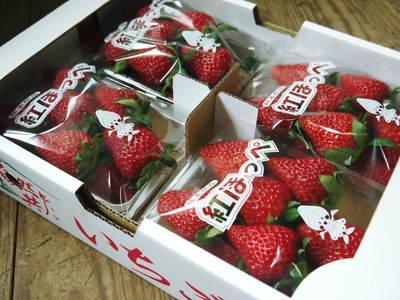 熊本産高級イチゴ『完熟紅ほっぺ』完熟の美味さ!朝採りの新鮮さ!こだわり減農薬栽培の安全性!が大好評!!_a0254656_12533559.jpg