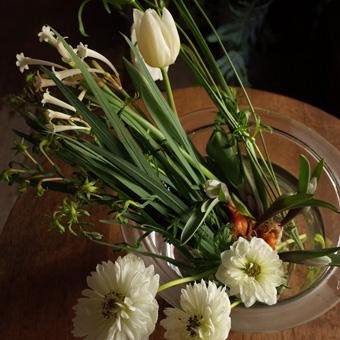 kukka永井さんの植物_c0200002_14553627.jpg