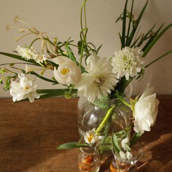 kukka永井さんの植物_c0200002_14573380.jpg