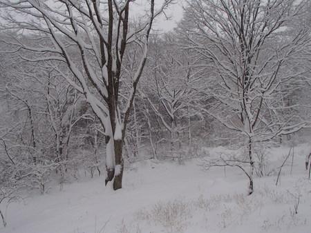 五郎の雪山_f0064906_1783187.jpg