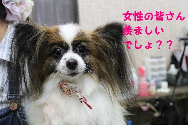 来月からバレンタイン企画はじまりまぁ~す!!_b0130018_21181271.jpg