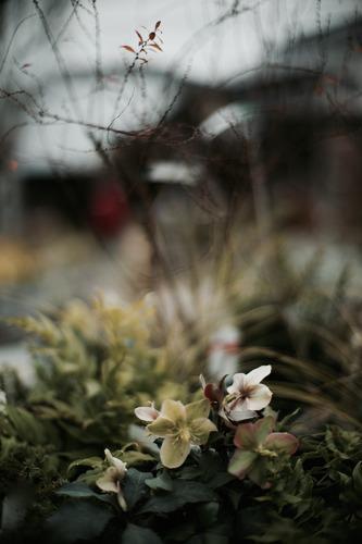 冬の薔薇_f0057849_12465270.jpg