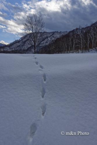 雪原の向こうへ_e0321360_00004269.jpg