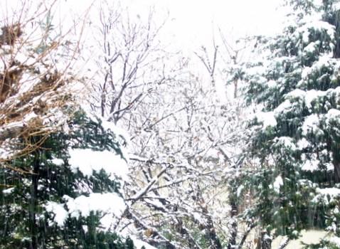 代官山の雪の日と チョロレートなティータイム。。꒰ღ˘◡˘ற✯*☪♥*・。♬♪。:☆.† ♡_a0053662_19171445.jpg
