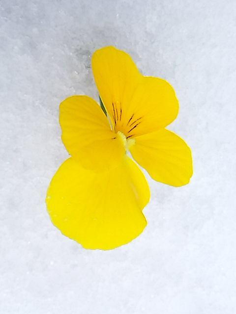 代官山の雪の日と チョロレートなティータイム。。꒰ღ˘◡˘ற✯*☪♥*・。♬♪。:☆.† ♡_a0053662_19174380.jpg