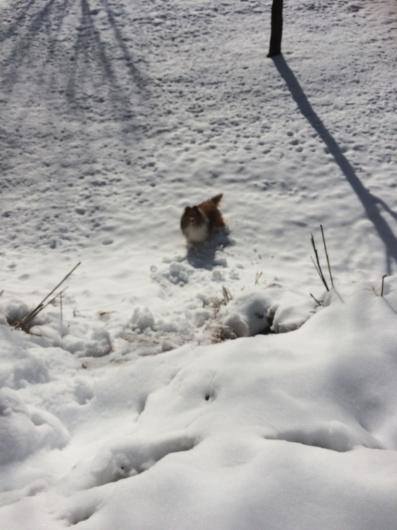 雪_f0126965_16520541.jpg