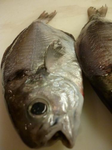 魚通…_e0252966_12502133.jpg