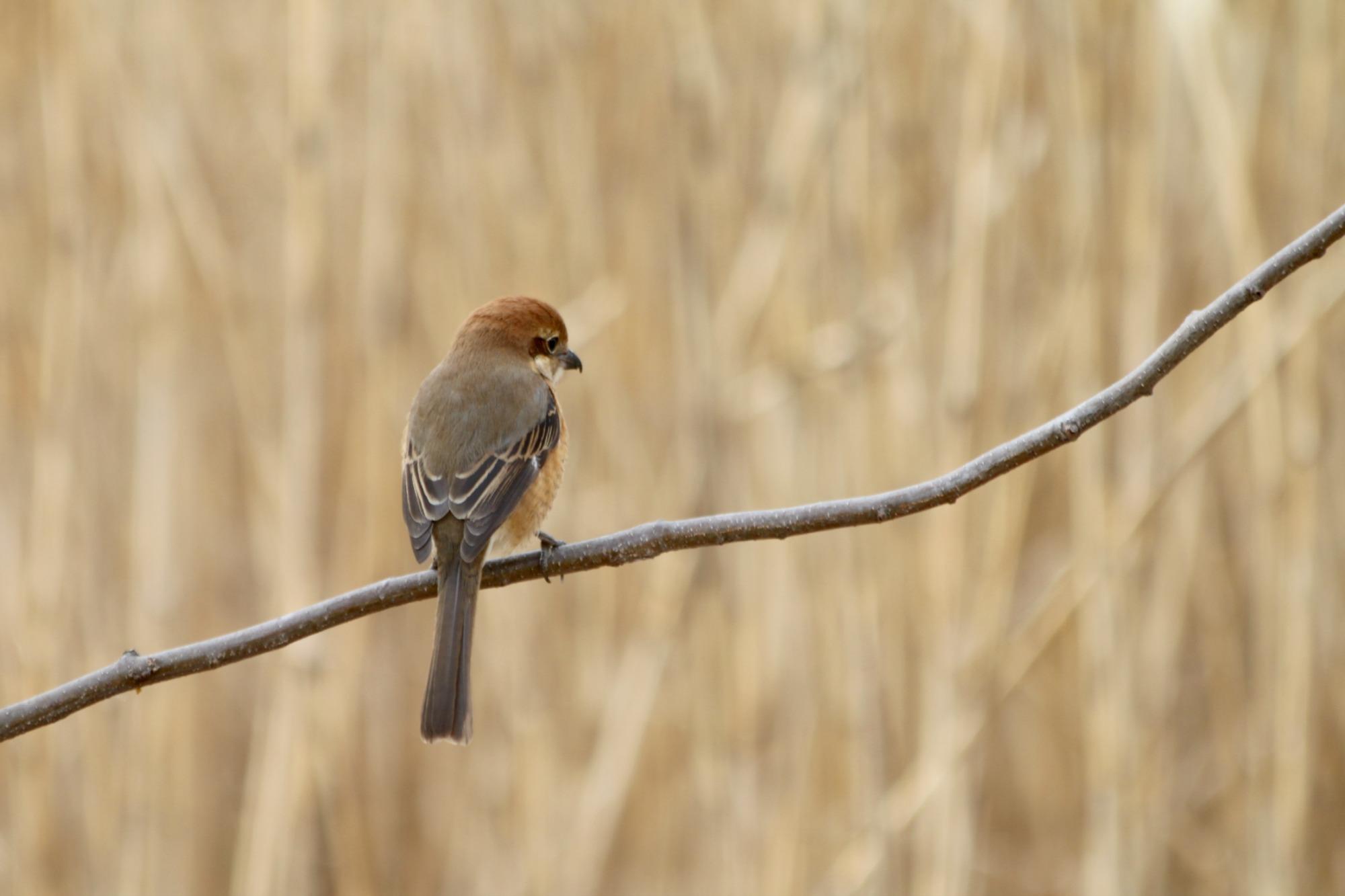 水元公園の鳥さんたち_a0127090_20432580.jpg