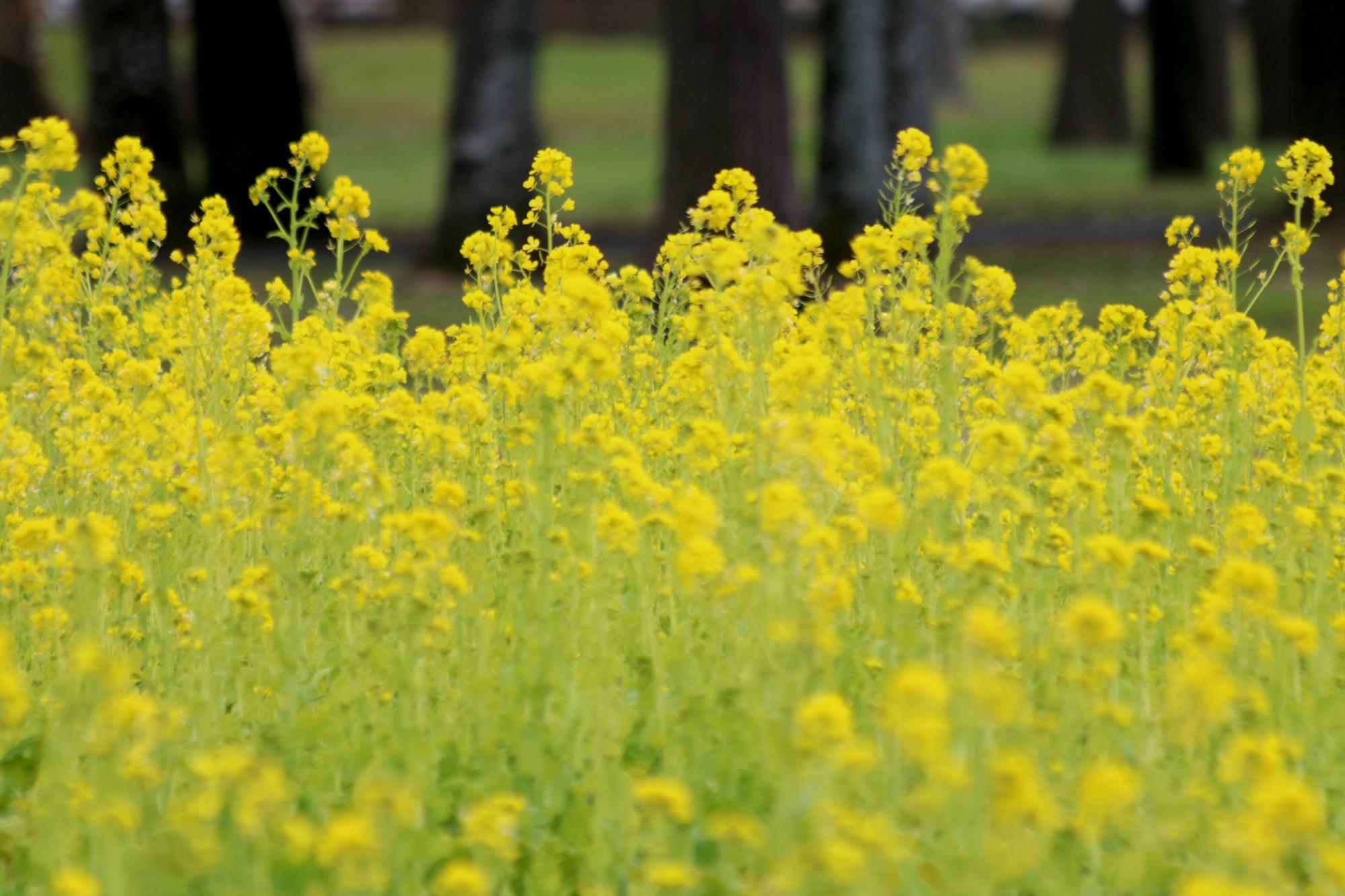 水元公園の鳥さんたち_a0127090_20504628.jpg