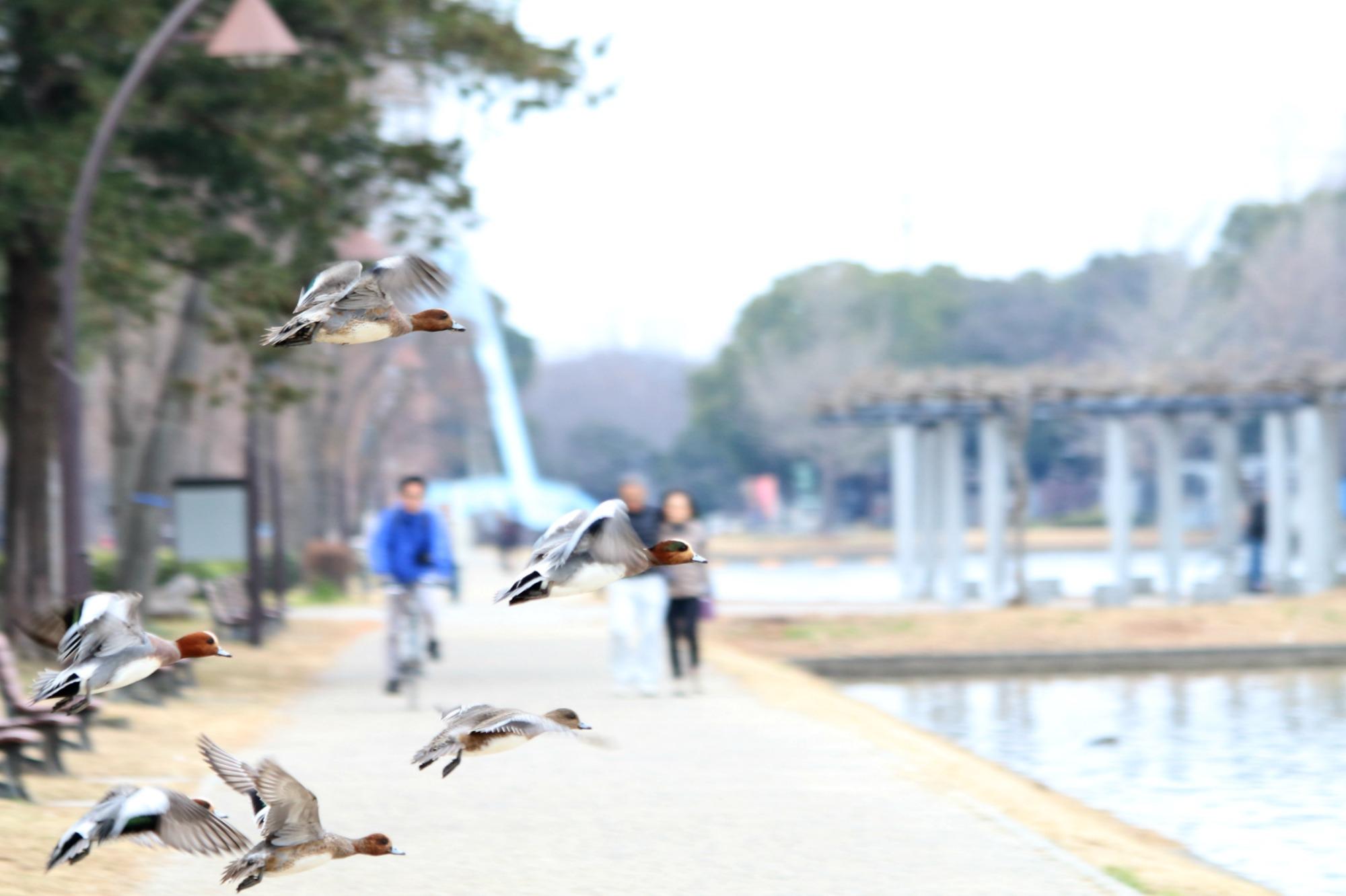 水元公園の鳥さんたち_a0127090_20512835.jpg