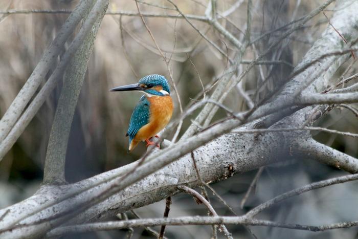 水元公園の鳥さんたち_a0127090_20523827.jpg