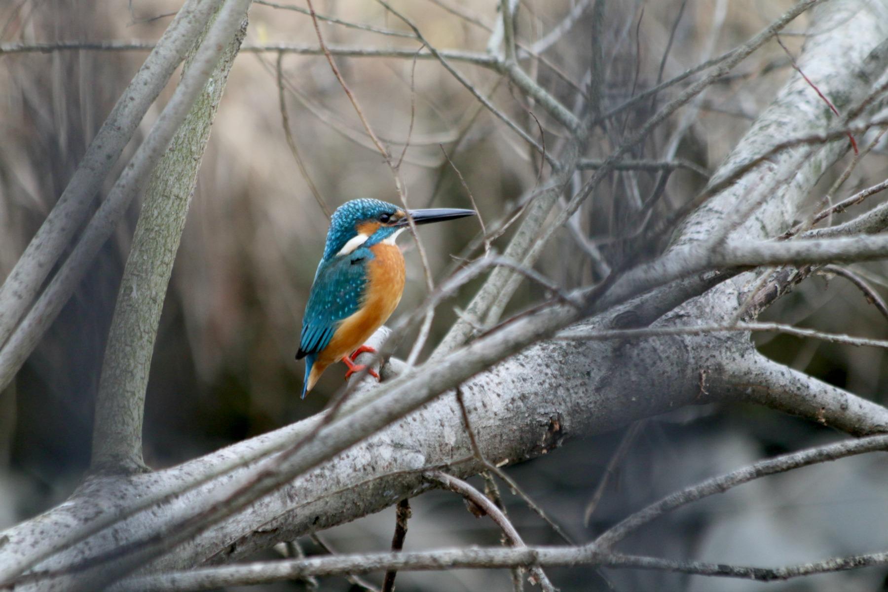 水元公園の鳥さんたち_a0127090_20524379.jpg