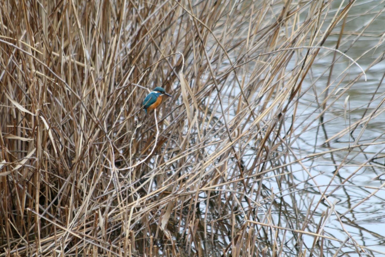 水元公園の鳥さんたち_a0127090_2053040.jpg