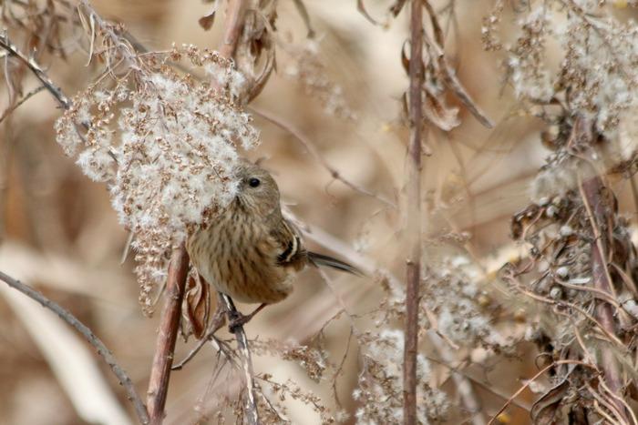 水元公園の鳥さんたち_a0127090_20573545.jpg