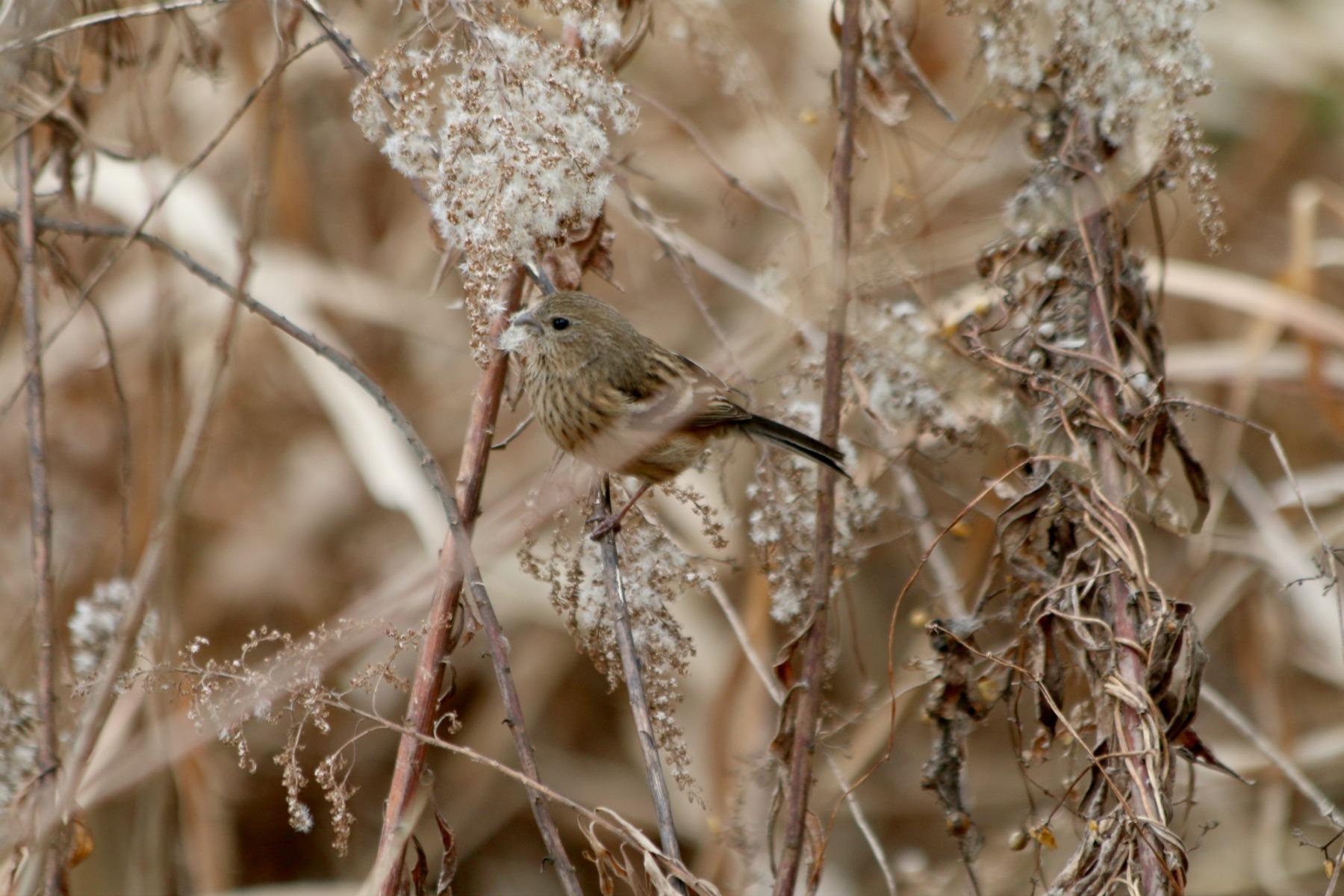 水元公園の鳥さんたち_a0127090_205786.jpg