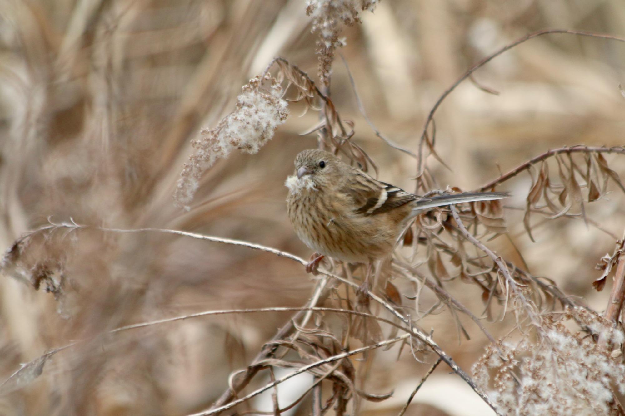 水元公園の鳥さんたち_a0127090_2058348.jpg