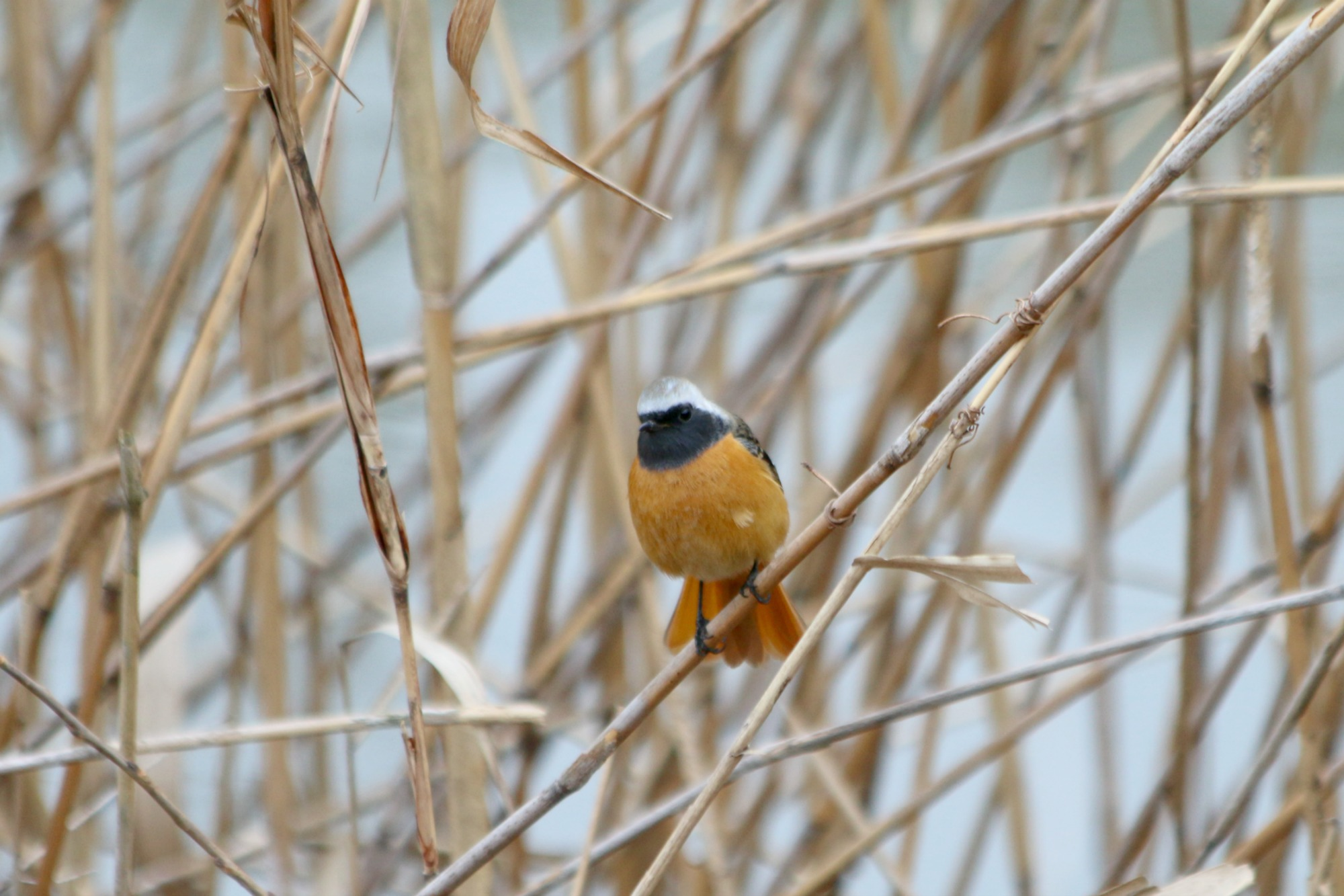 水元公園の鳥さんたち_a0127090_2103715.jpg