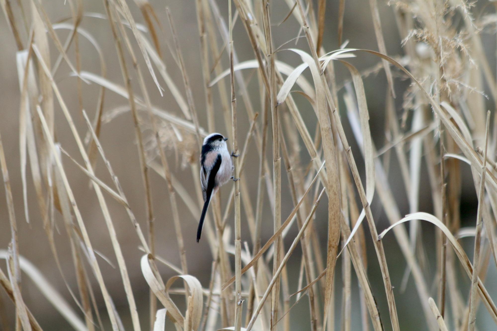 水元公園の鳥さんたち_a0127090_2113450.jpg