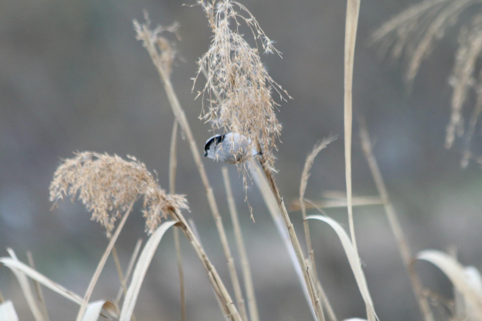 水元公園の鳥さんたち_a0127090_2113825.jpg