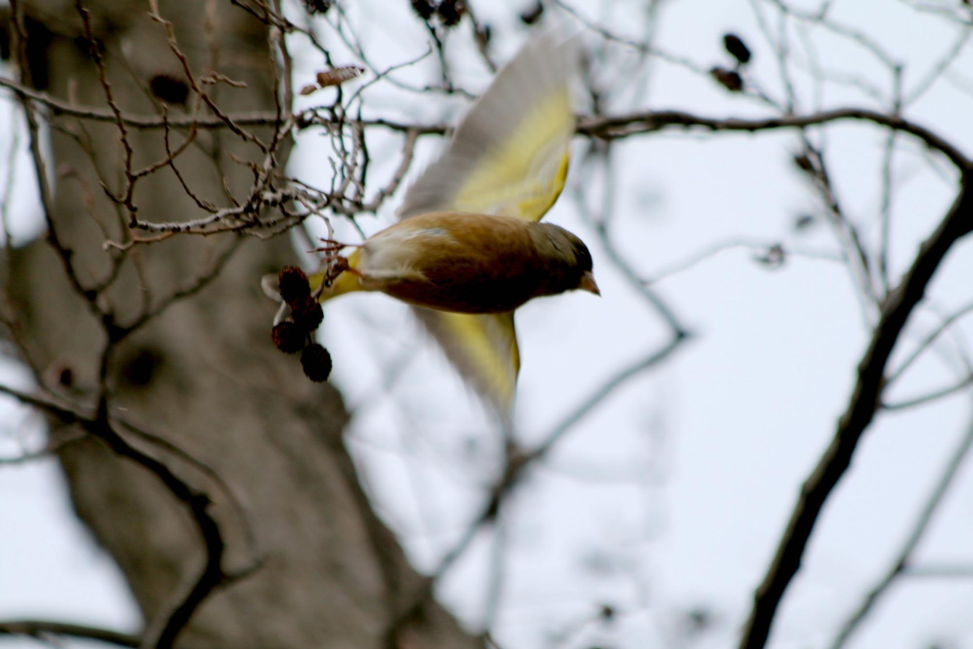 水元公園の鳥さんたち_a0127090_2122080.jpg