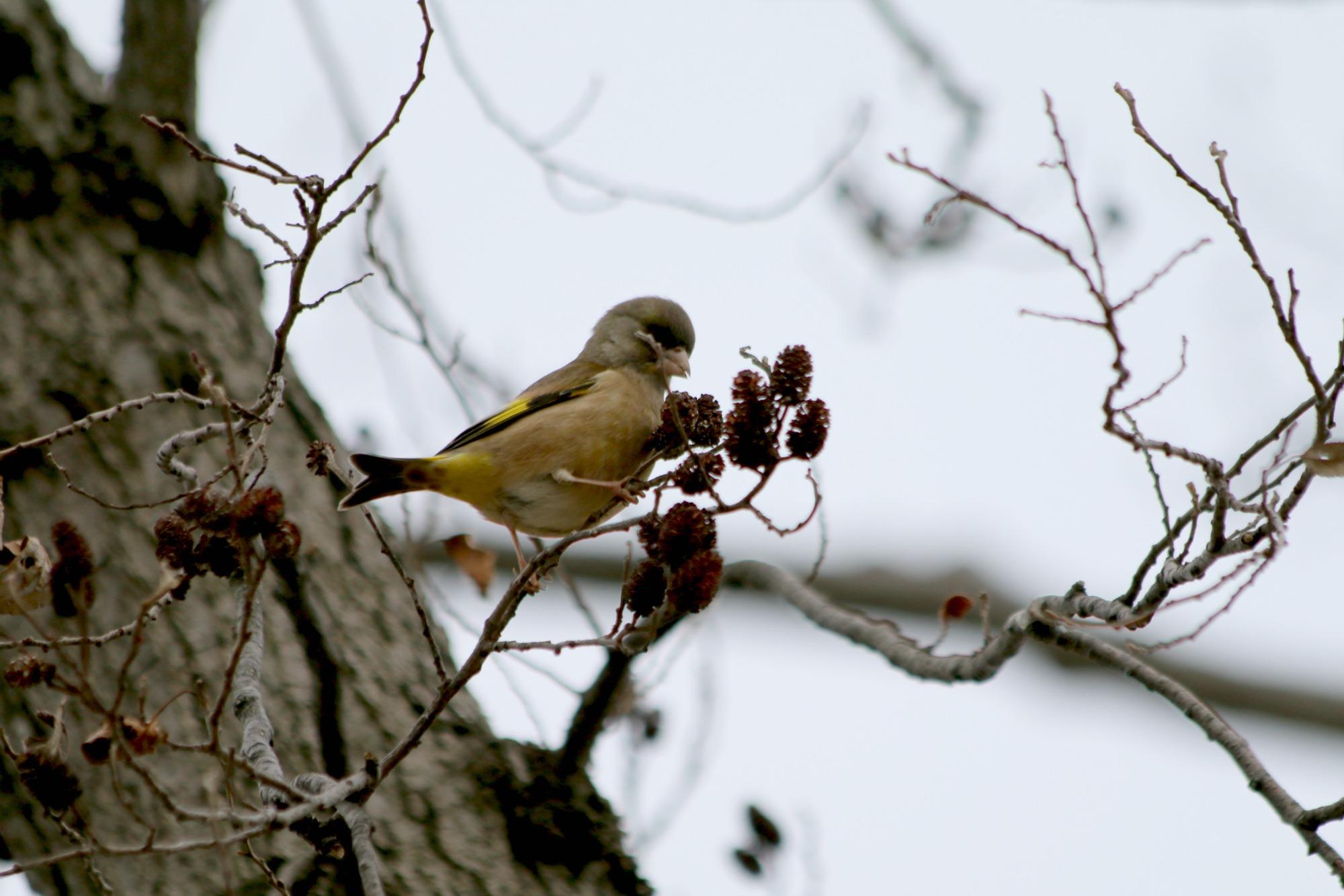 水元公園の鳥さんたち_a0127090_212698.jpg