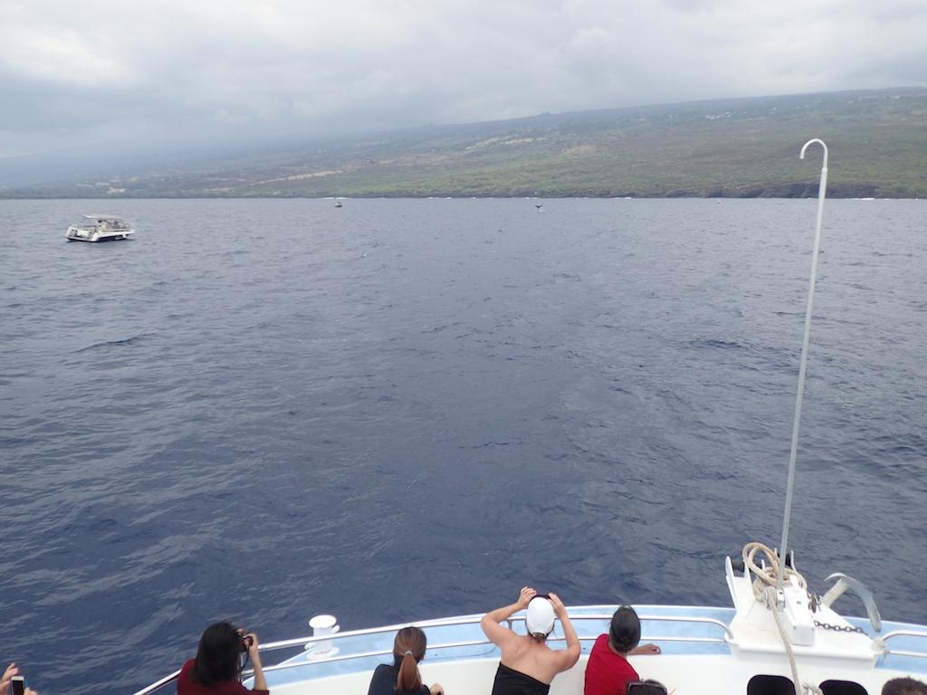 1/8-11 HAWAII ISLAND_a0010095_16145355.jpg