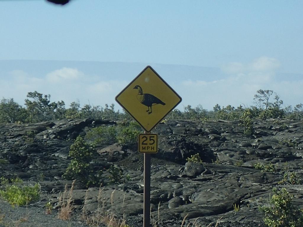 1/8-11 HAWAII ISLAND_a0010095_16284823.jpg