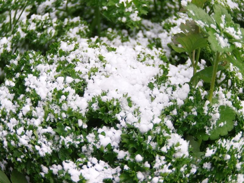 初冠雪です。_a0125419_14470097.jpg