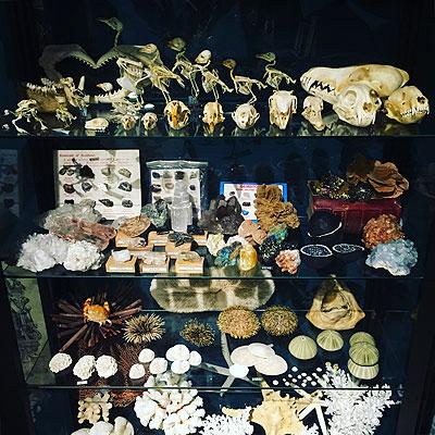 全身骨格標本_f0247848_18584585.jpg
