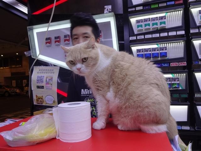 尖東忌廉哥 信和便利店店長 _b0248150_04145818.jpg