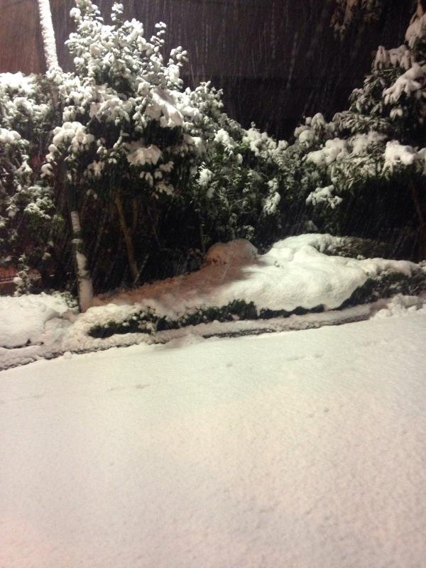 今年の初雪_b0219170_10282124.jpeg