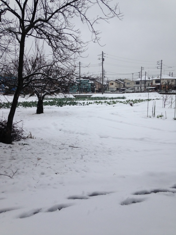 今年の初雪_b0219170_10284658.jpeg