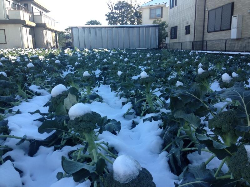今年の初雪_b0219170_10311393.jpeg