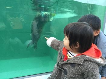 正月早々 須磨水族館&中華街食べ歩き~♪_e0123286_19452420.jpg