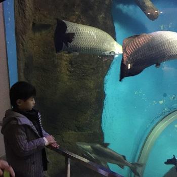 正月早々 須磨水族館&中華街食べ歩き~♪_e0123286_19482677.jpg