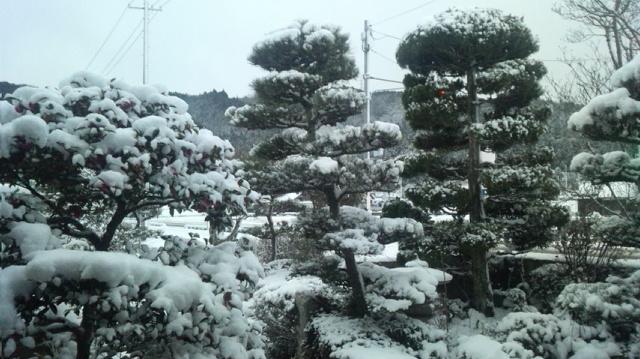 今朝は雪。セミナーへ♪_a0203987_223567.jpg