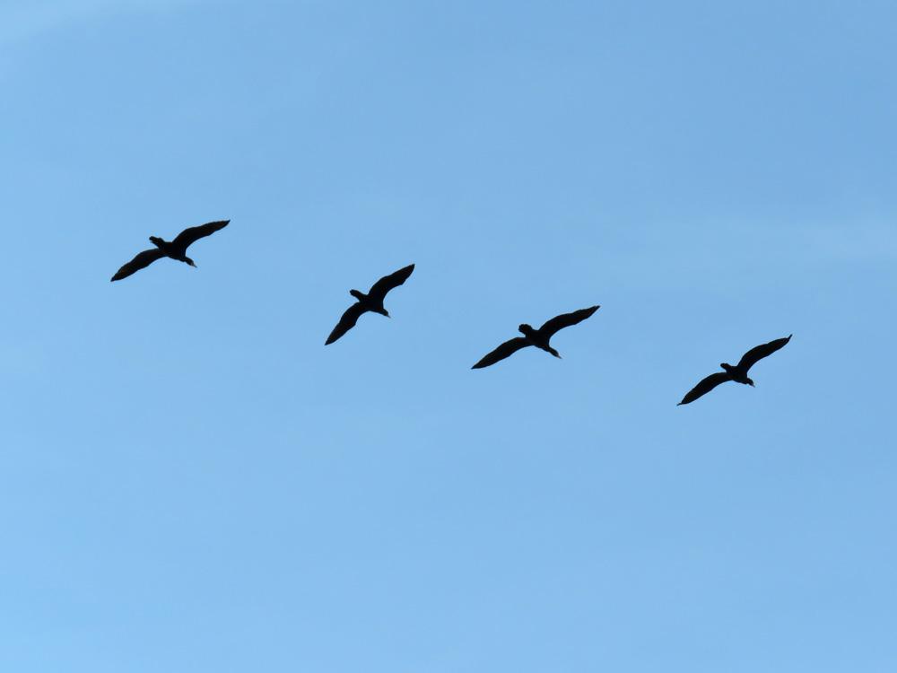 鳥・とり・トリ~♪ (^o^)_c0049299_20521768.jpg