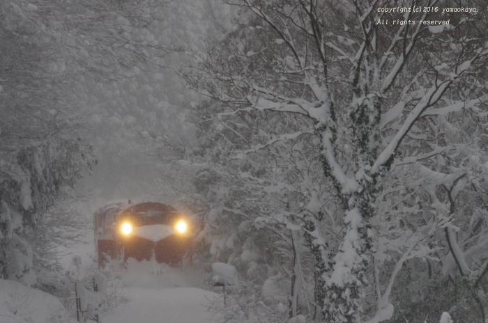 豪雪の朝に_d0309612_2339327.jpg