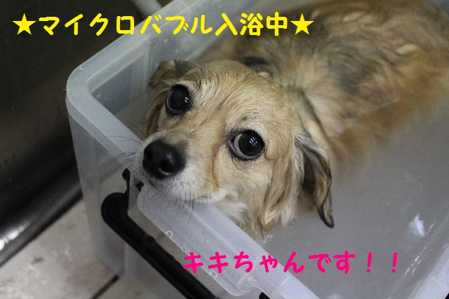来月からバレンタイン企画はじまりまぁ~す!!_b0130018_840219.jpg