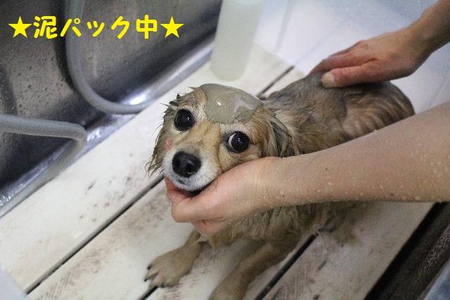来月からバレンタイン企画はじまりまぁ~す!!_b0130018_8404090.jpg