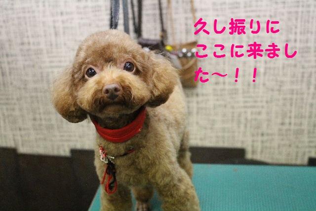 来月からバレンタイン企画はじまりまぁ~す!!_b0130018_8441633.jpg