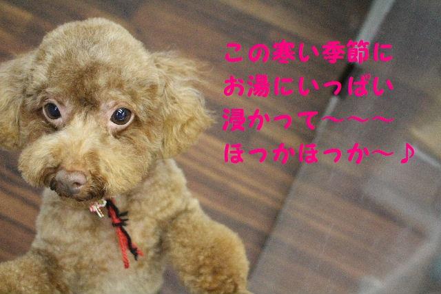 来月からバレンタイン企画はじまりまぁ~す!!_b0130018_8443236.jpg