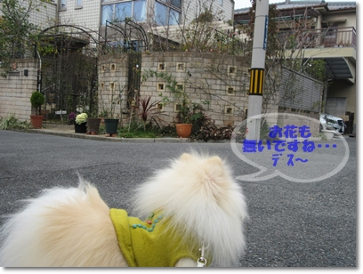 b0167519_15291119.jpg