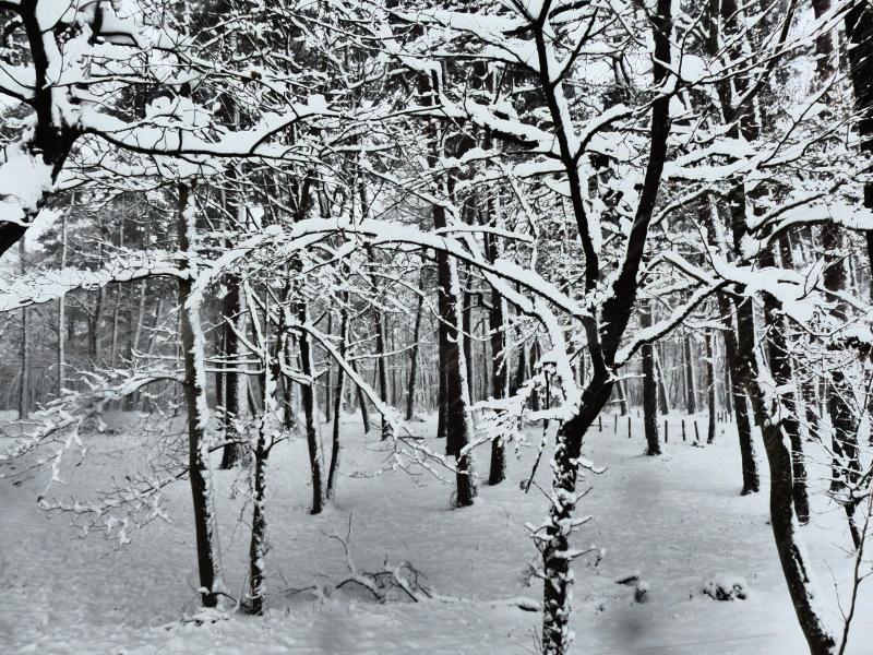積雪_a0288621_07400402.jpg