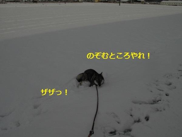 f0143123_10160270.jpg